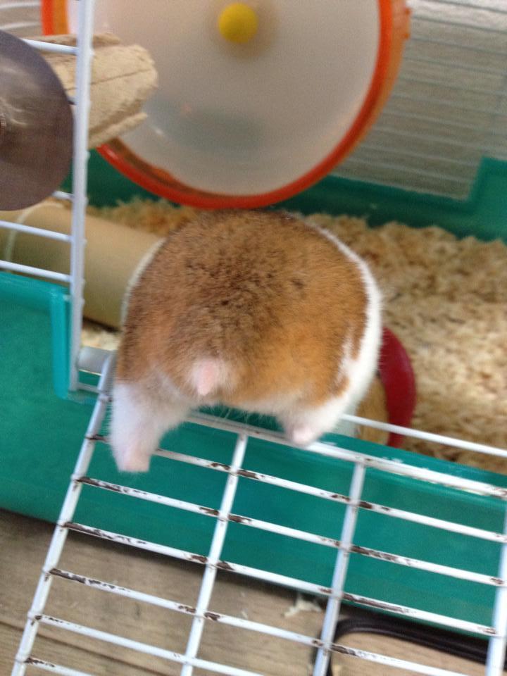 hamster butt facebook