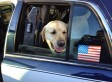 Dog Who Went Missing Before Superstorm Sandy Is Reunited With His Owners After 17 Months