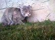 First-Person Cat Battle!