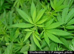 Woman Allegedly Calls Cops To Complain About Weed Quality