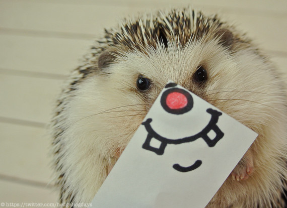 cute hedgehog impossibly silly masks him poses appears emotion constructs expressive least miniature marutaro owner thanks paper way