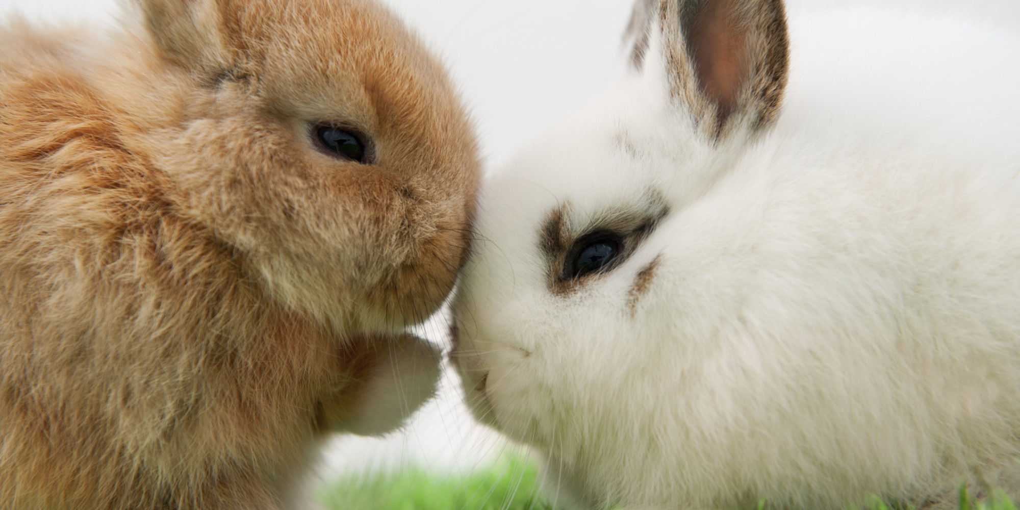 Fluffiest rabbits the