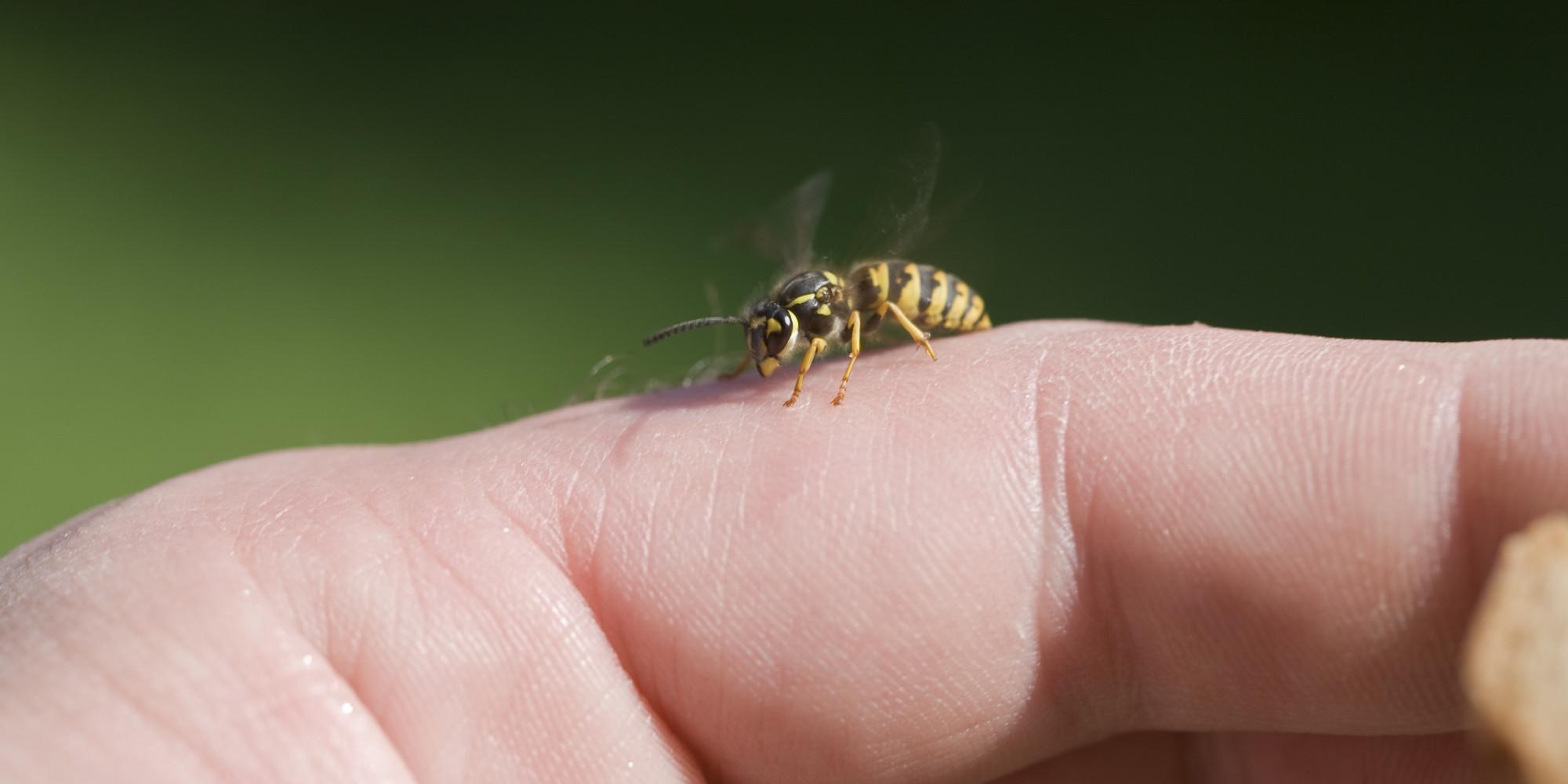 The scorpion doesn sting with black angelika hardsextube - 5 2