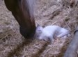 Helpful Horse Assists Cat With An Itch (VIDEO)