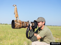 CUTE PICTURES ALERT: Meerkats Use Photographer As Lookout Post
