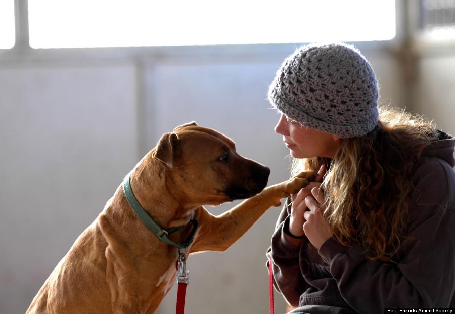 Hasil gambar untuk dog happy to see owner