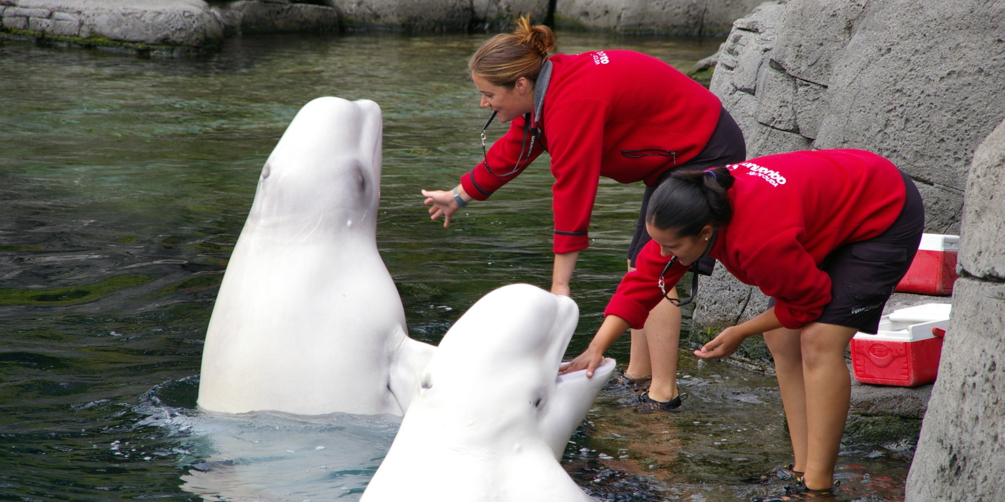 Vancouver aquarium s political gaming is legal but is it ethical