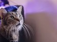 This Web Series Proves Internet Cat Videos Aren't A Waste Of Time