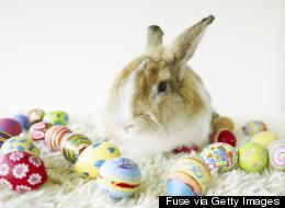 Un couple blâme le lapin de Pâques pour la fermeture de son foyer d'accueil