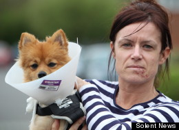 Woman Hurt Defending Puppy In Dog Attack (GRAPHIC IMAGE)