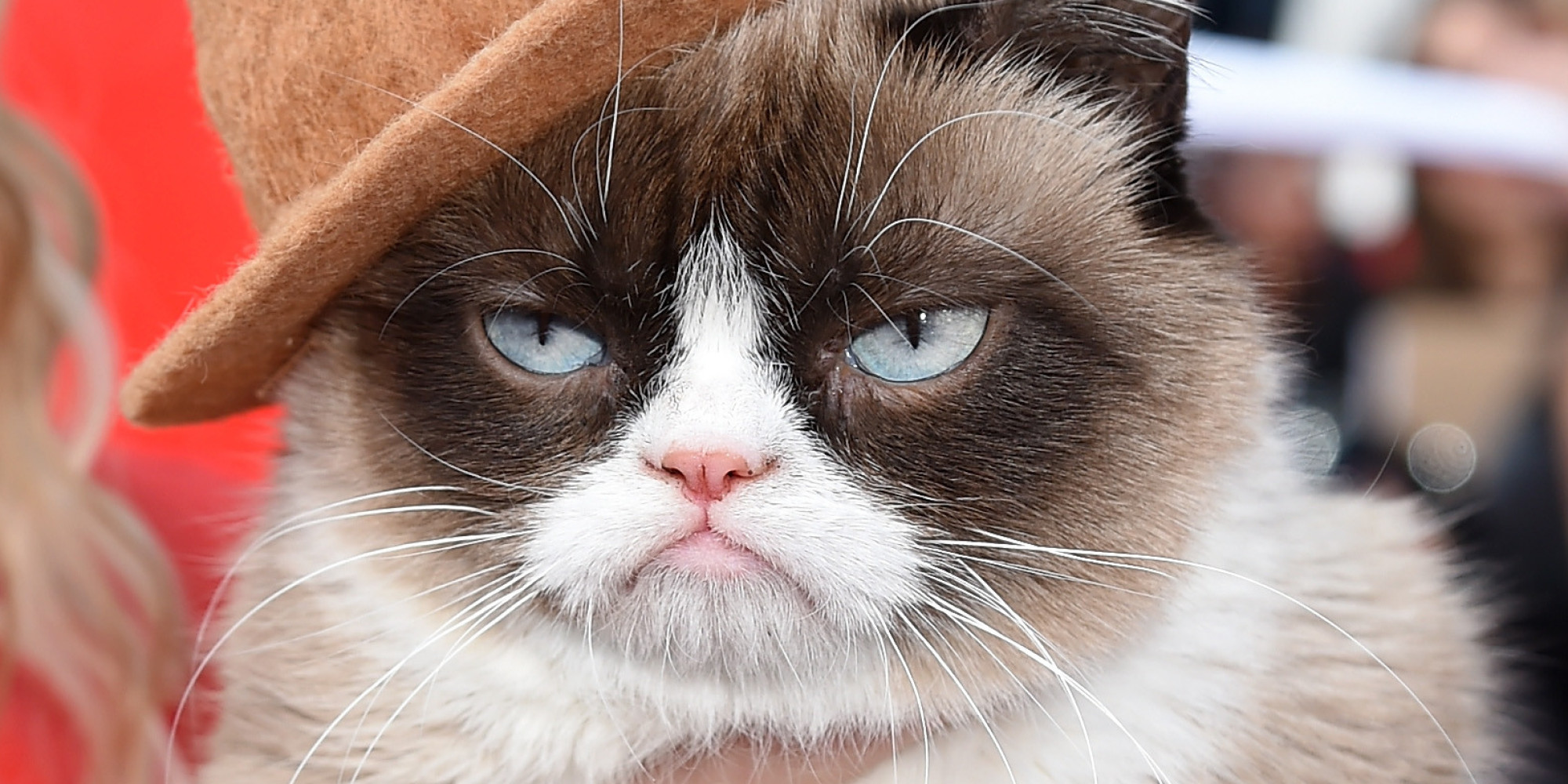 grumpy cat gets our vote for best dressed feline at the. Black Bedroom Furniture Sets. Home Design Ideas
