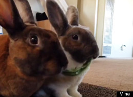 WATCH: Two Bunnies, One Leaf