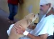 Dog Waits Outside Hospital For 8 Days Before Reuniting With Owner