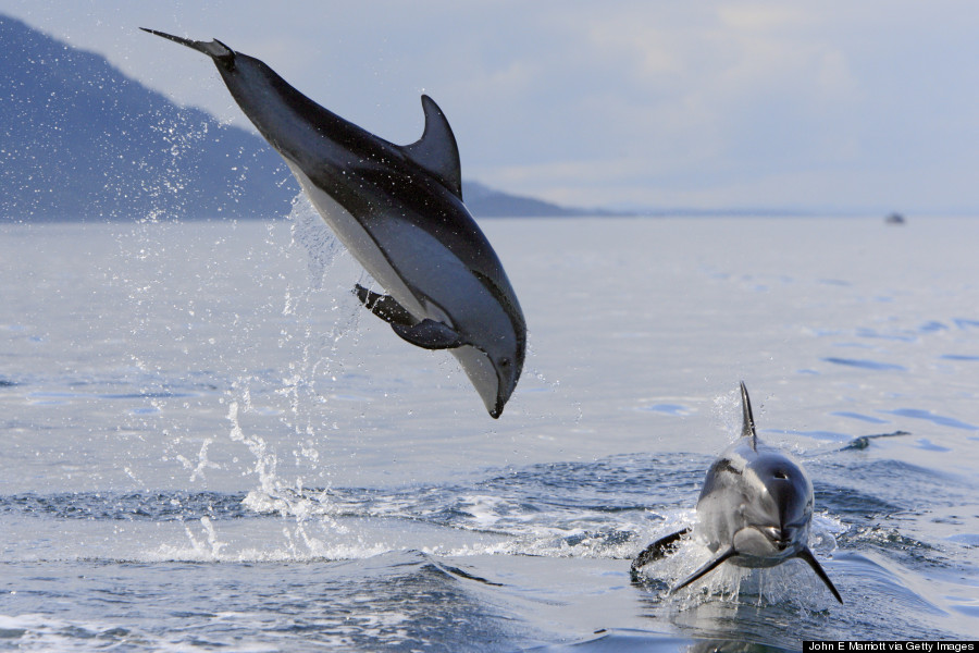 Celebrate National Dolphin Day With A Look At These Unique ... - photo#20