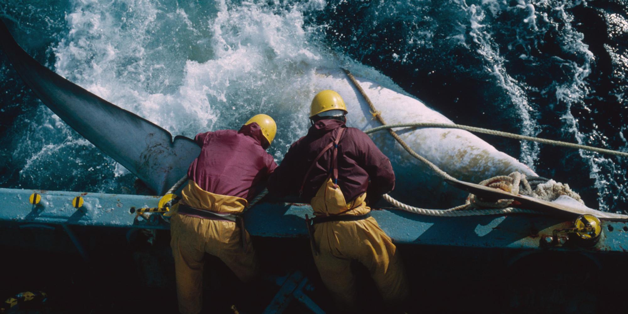 Antarctic Whaling: Japan Seeks To Resume Lethal Research