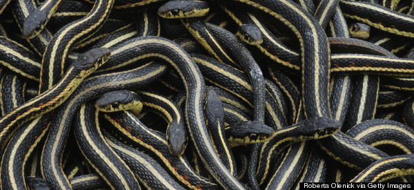 High School Closed Due To 'Onslaught Of Snakes'