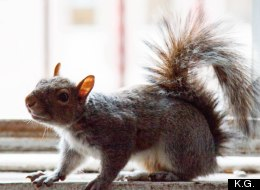 You'll Go NUTS For This Guy's Squirrel Story