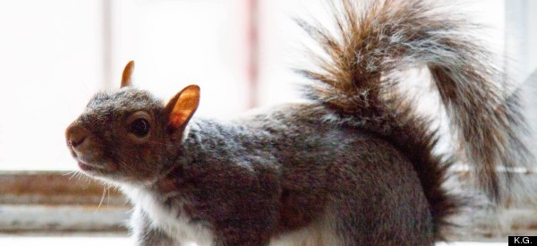 Meet The NYC Man Who Hides Nuts In His Apartment For Squirrels
