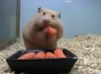 Watch A Tiny Hamster Inhale 5 Baby Carrots In A Matter Of Seconds