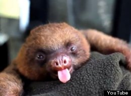 WATCH: Sloths For Days And Days For Sloths