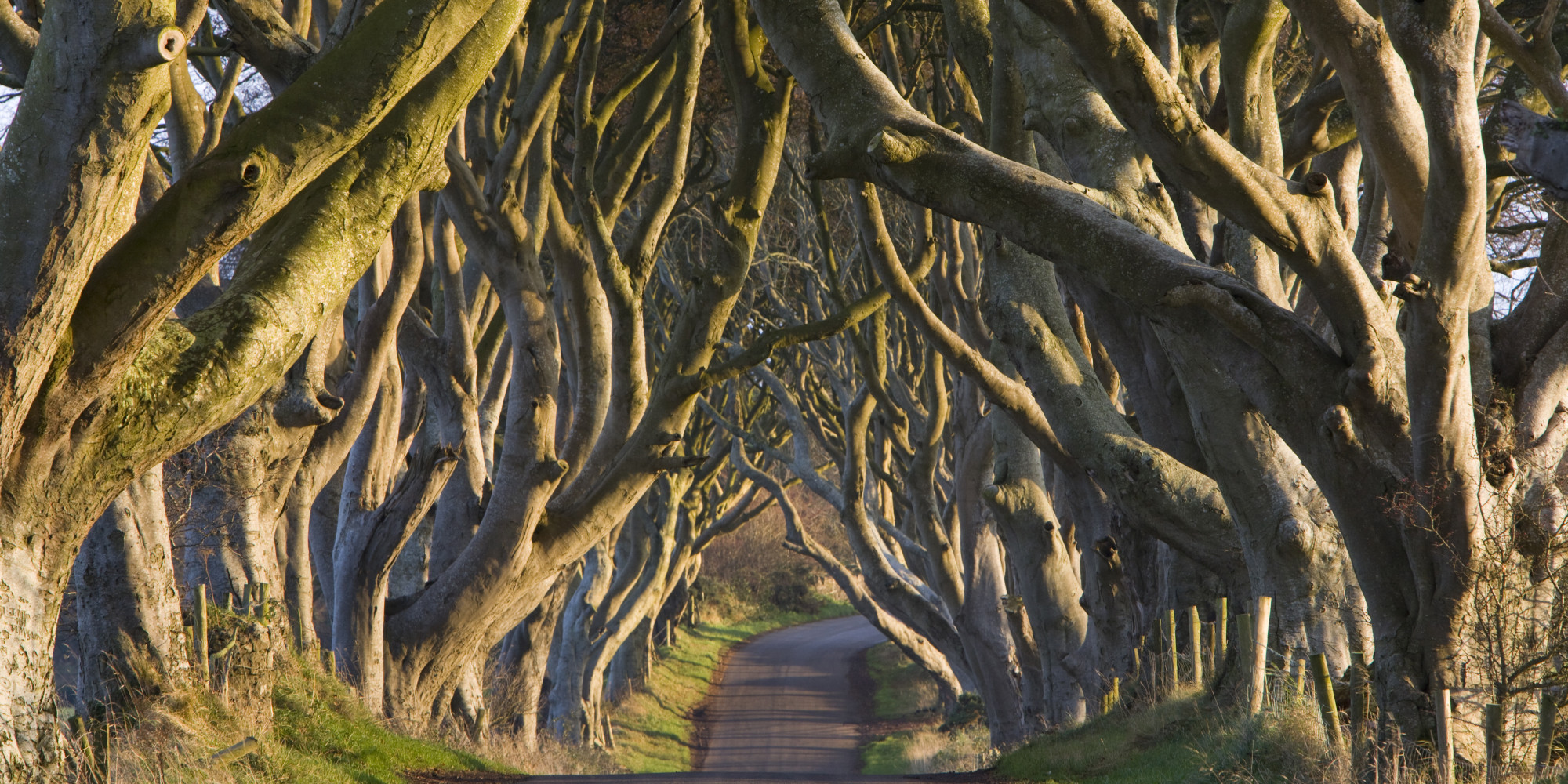 14 Spectacular Tree Lined Paths That Ll Leave You In Awe