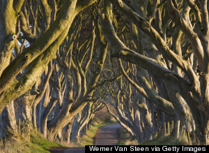 14 Spectacular Tree-Lined Paths That'll Leave You In Awe