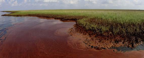 Barataria Bay Oil Spill