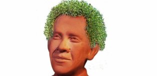 Yes, The Chia Seeds You Eat Are The Same Ones That Grow On Chia Pets