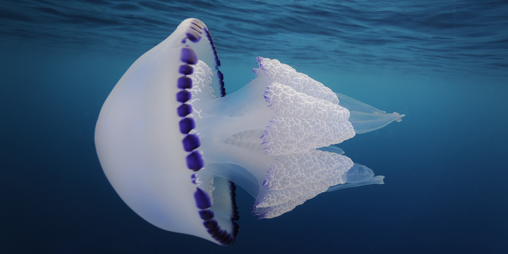 Jellyfish Pictures | London based Animation & VFX