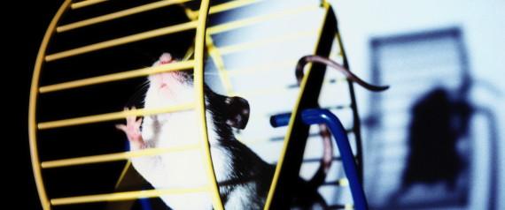 RAT WHEEL