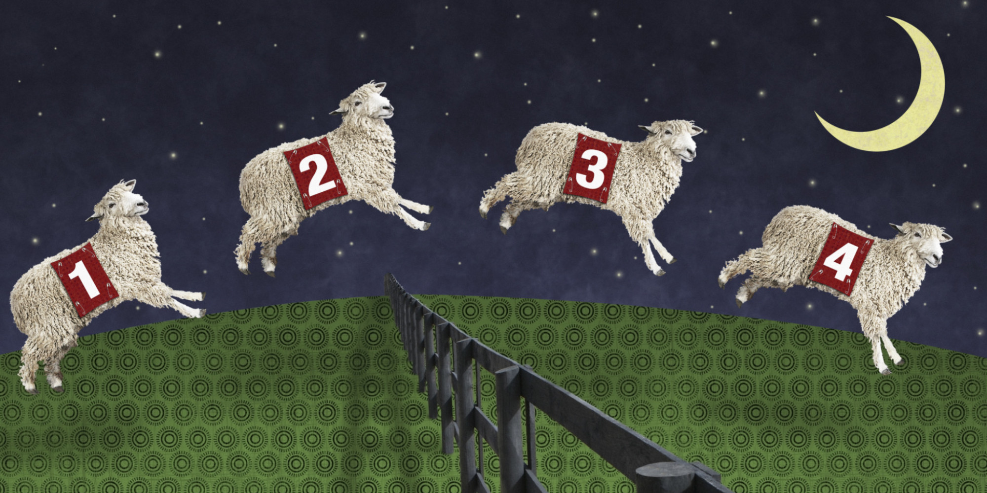 Doctor Hamer: Counting sheep