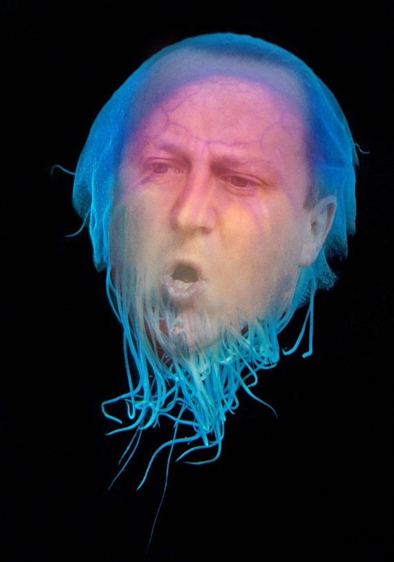 david cameron jellyfish