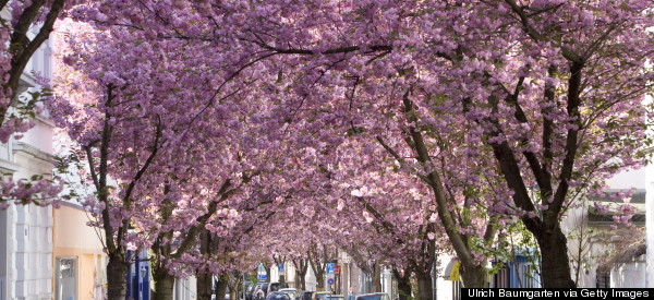 Germany's Cherry Blossom Season Totally Beats Yours