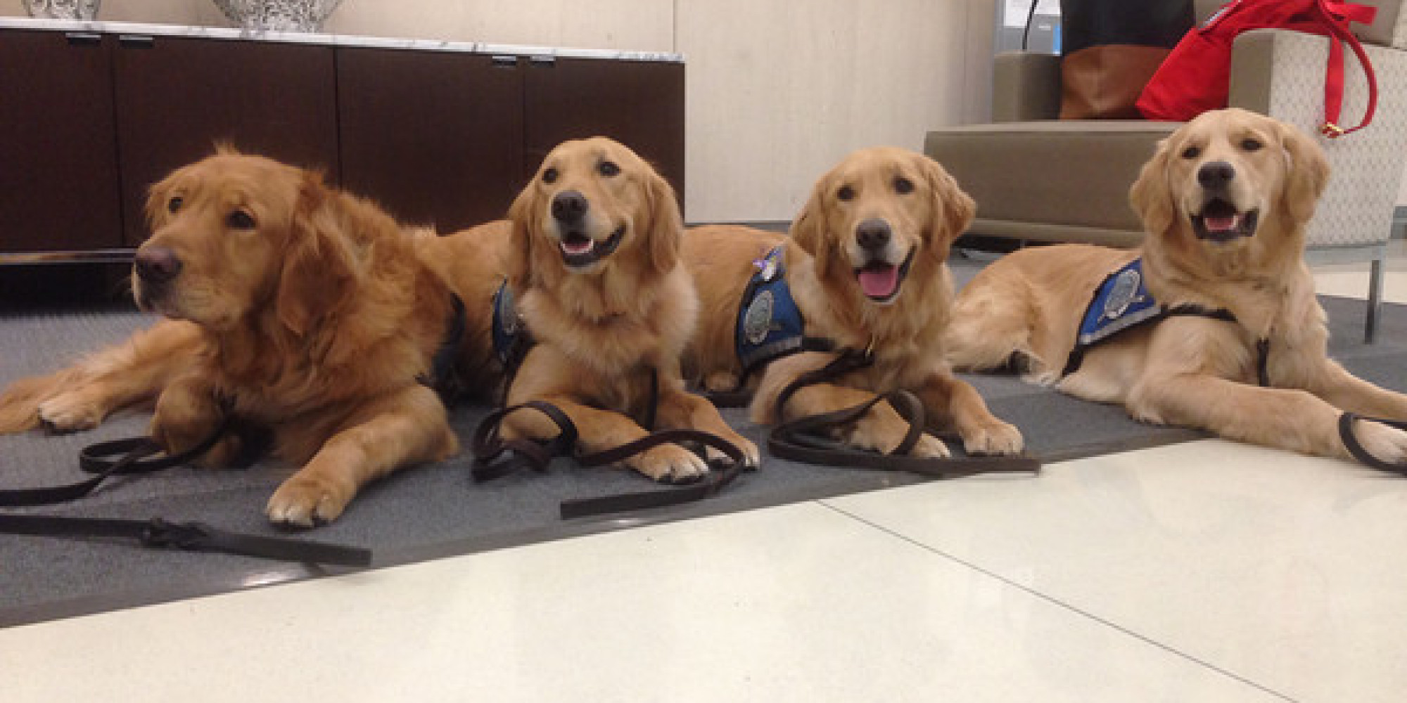 comfort dogs return to boston for cuddles ahead of 2014 marathon