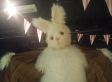 WATCH: We Met The Easter Bunny, And He's A Creep