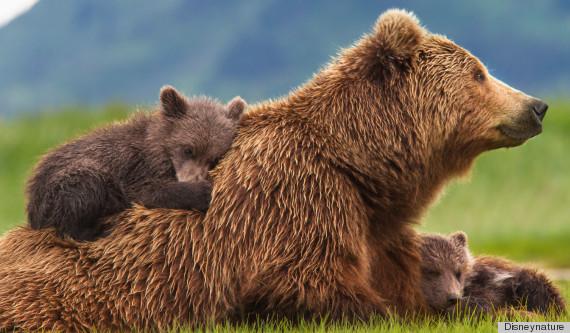jane goodall bears