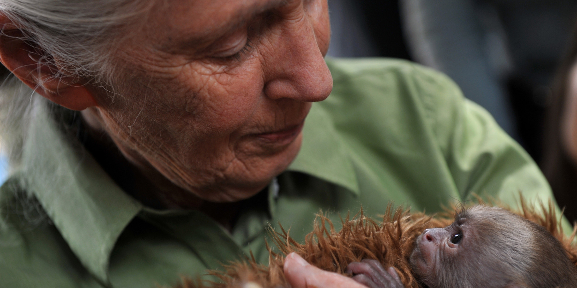 10 Inspiring New Year's Resolutions From My Conversations With Jane Goodall   Kristi York Wooten