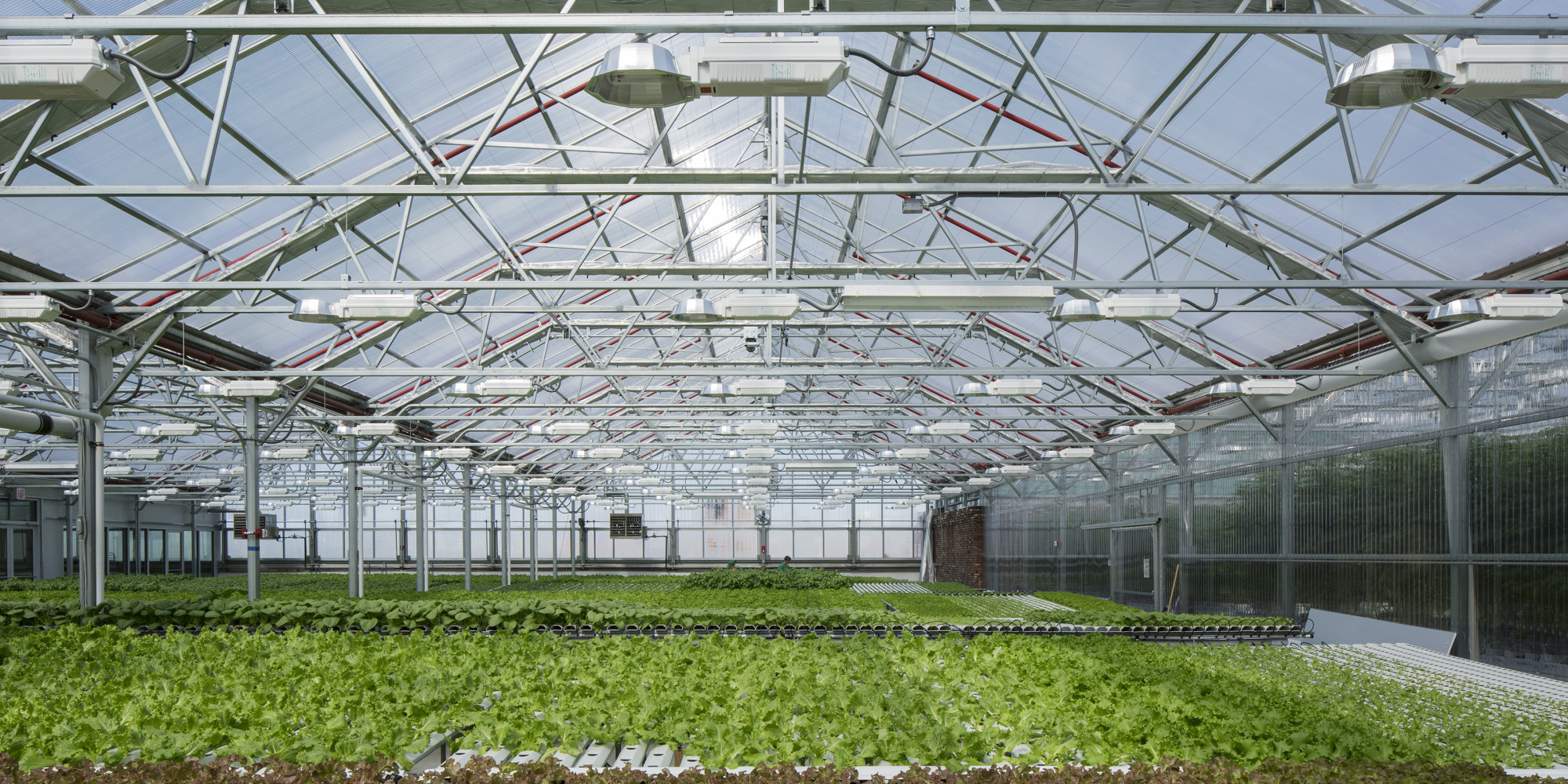 Gotham Greens Is Pushing The Scale Of Urban Agriculture