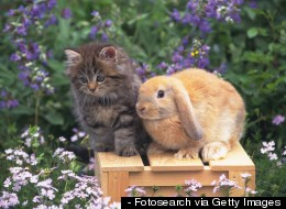 Cats and Bunnies Are Our New Favorite BFFs