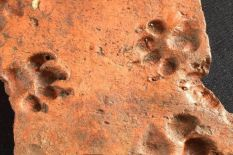 ancient puppy prints