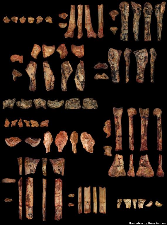 pterodactyloid bones