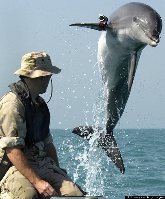 dolphin military