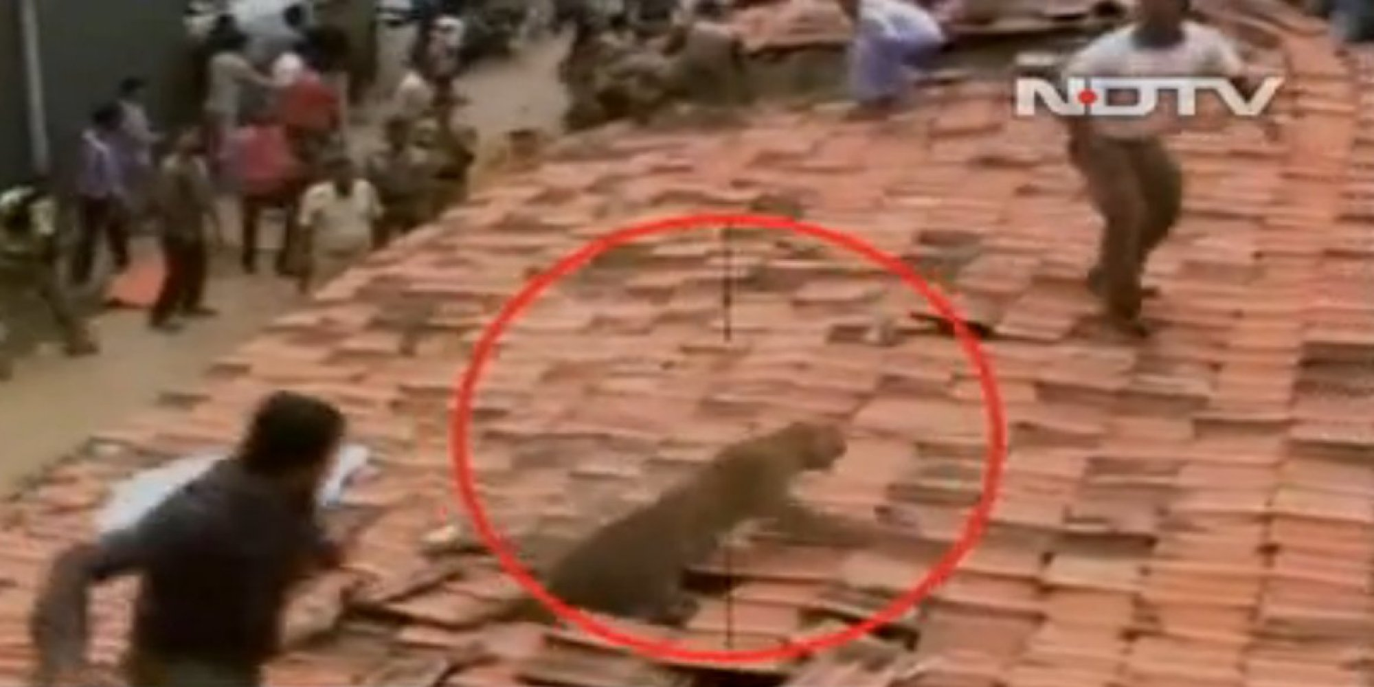 leopard leaps through roof attacks villagers in india