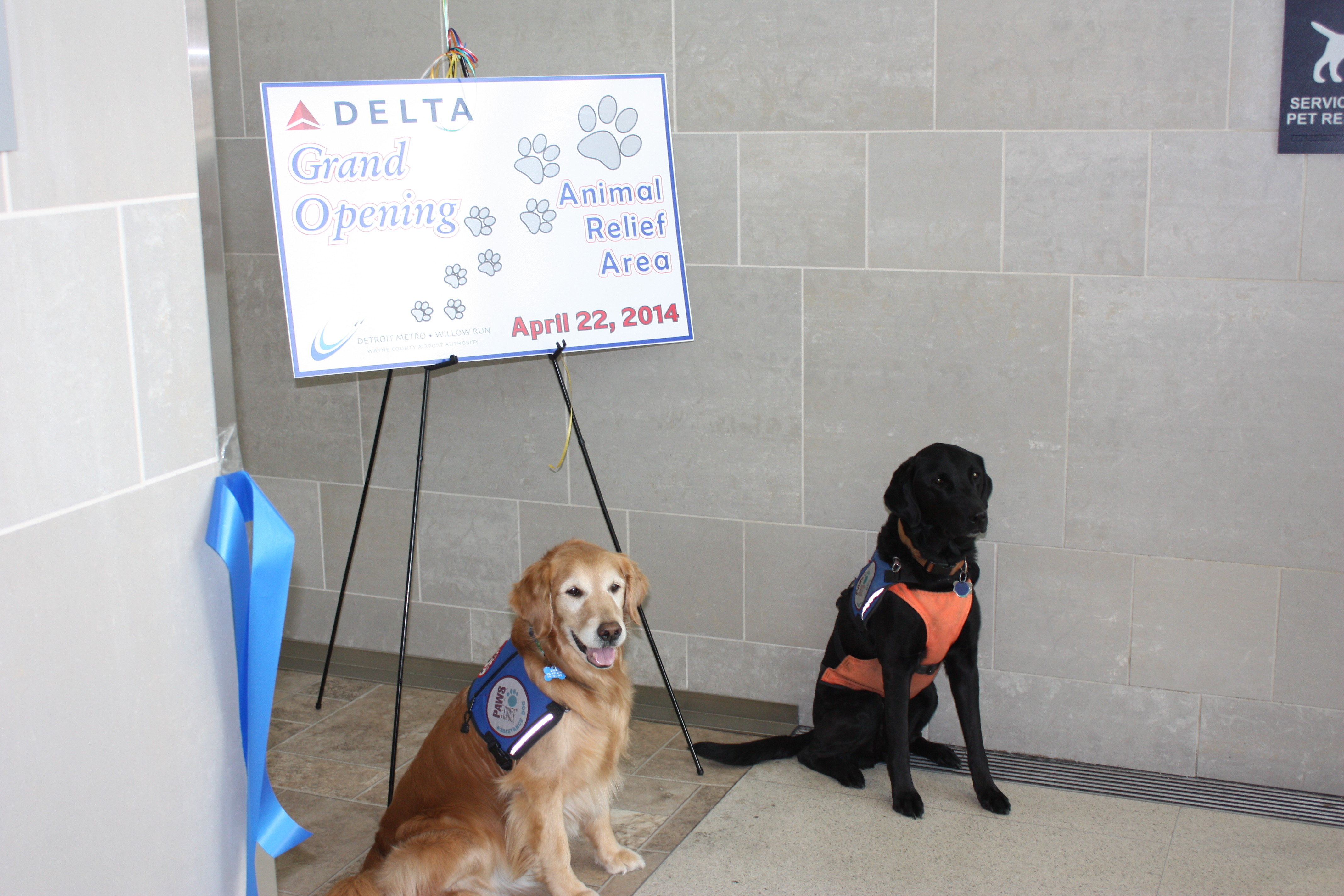 Fake Service Dogs Airport