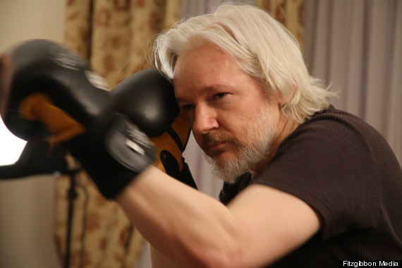 julian assange boxing