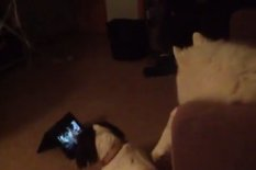 Dogs watching iPads | Pic: YouTube