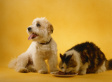Understanding the First Phase of Disease in Dogs and Cats