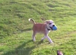 WATCH: Dogs Playing Fetch By Themselves