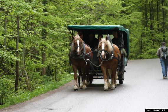 horse carriage neuschwanstein