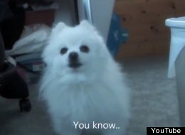 WATCH: This Dog Has Got Something To Tell You